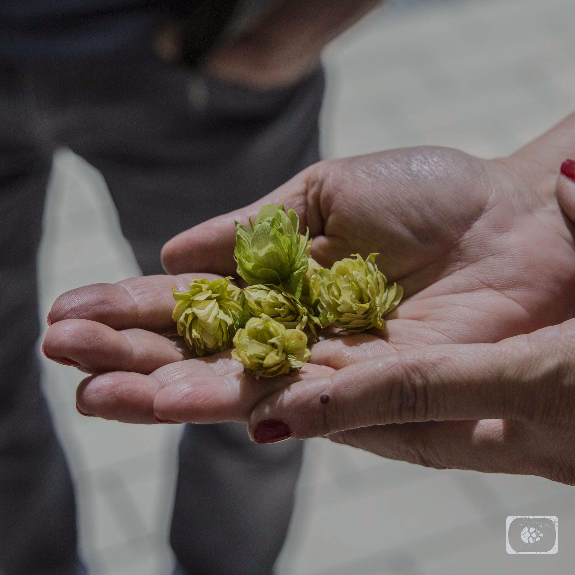 Galician Brew Lúpulo